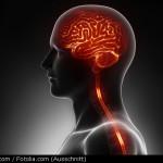 Gehirn und Nervenbahnen