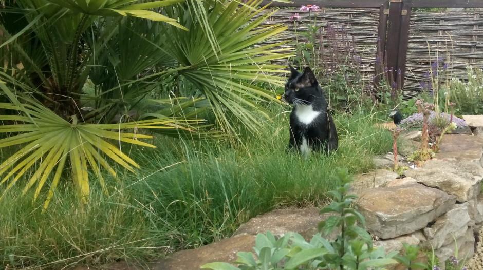 Kater im Garten
